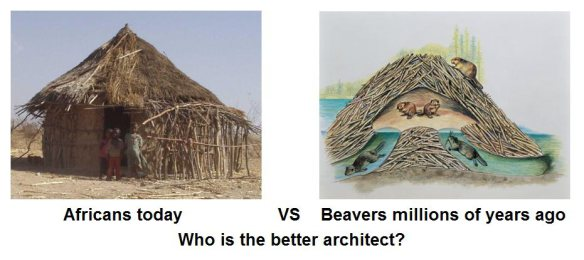 Click image for larger version.  Name:africans-vs-beavers.jpeg Views:95 Size:30.2 KB ID:7500