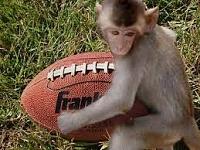 Click image for larger version.  Name:MonkeyFucksFootball.jpg Views:7 Size:12.8 KB ID:16860