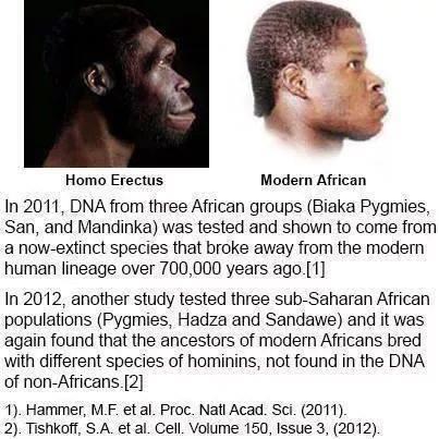 Click image for larger version.  Name:homo erectus.jpg Views:162 Size:41.0 KB ID:17613