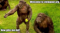 Click image for larger version.  Name:chimpGibs.jpg Views:6 Size:229.5 KB ID:10765