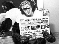 Click image for larger version.  Name:chimponaut.jpg Views:16 Size:24.3 KB ID:7624